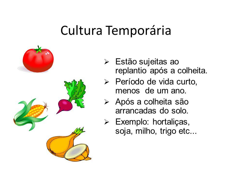 Cultura Temporária Estão sujeitas ao replantio após a colheita. Período de vida curto, menos de um ano. Após a colheita são arrancadas do solo. Exempl