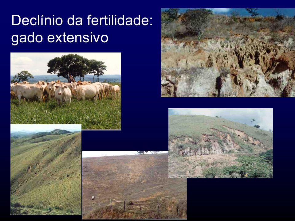 Declínio da fertilidade: gado extensivo