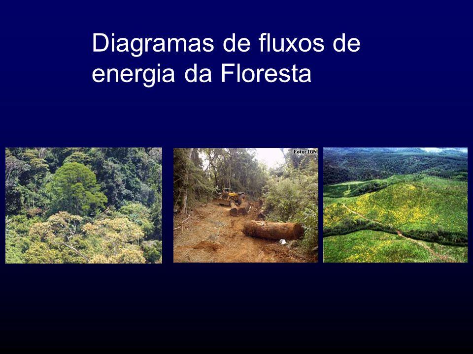 Diagramas de fluxos de energia da Floresta