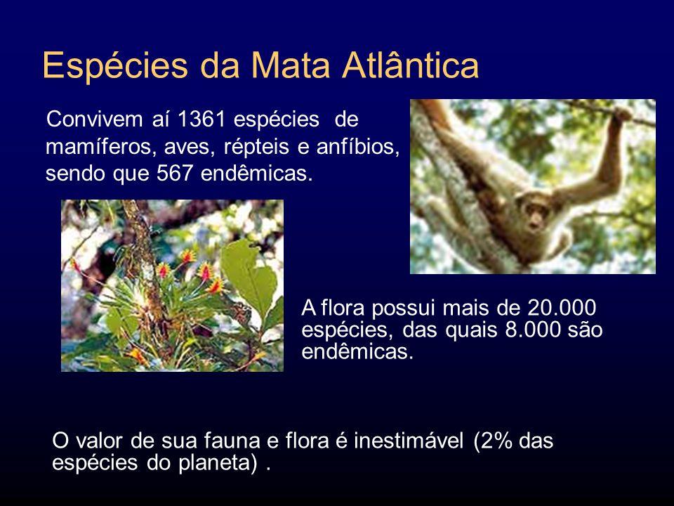 Espécies da Mata Atlântica Convivem aí 1361 espécies de mamíferos, aves, répteis e anfíbios, sendo que 567 endêmicas.