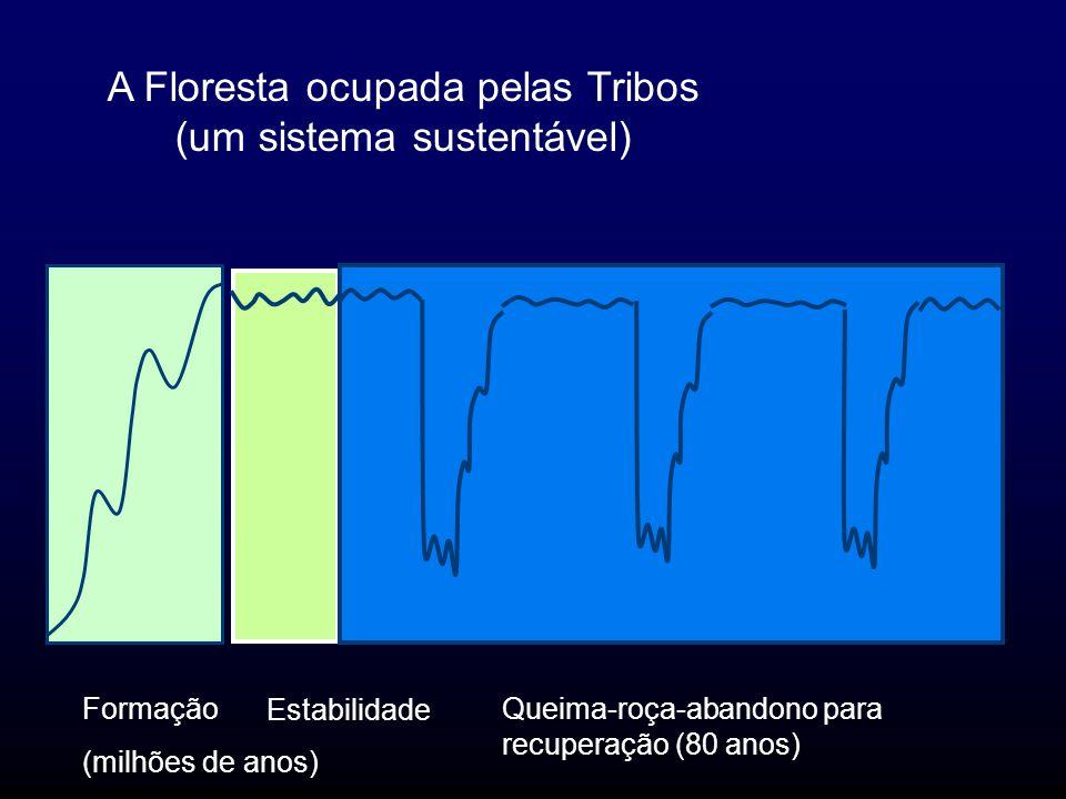 A Floresta ocupada pelas Tribos (um sistema sustentável) Formação (milhões de anos) Estabilidade Queima-roça-abandono para recuperação (80 anos)