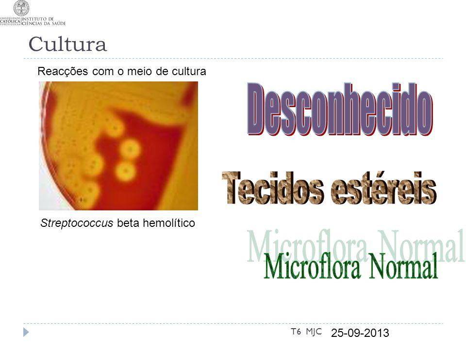 Cultura Streptococcus beta hemolítico 25-09-2013 T6 MJC Reacções com o meio de cultura
