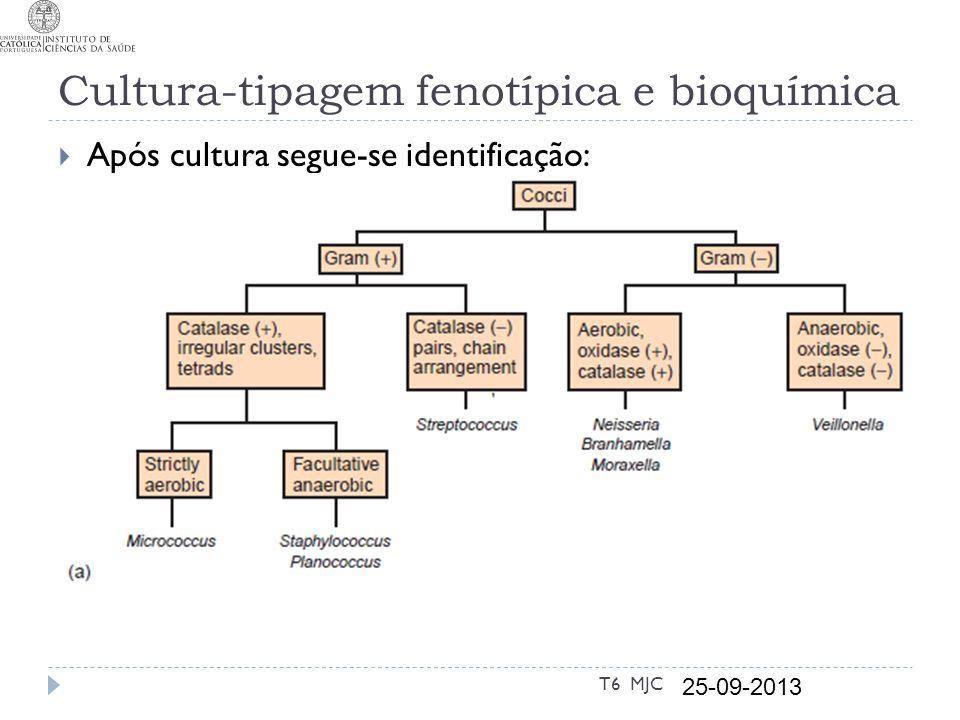 Cultura-tipagem fenotípica e bioquímica Após cultura segue-se identificação: T6 MJC 25-09-2013