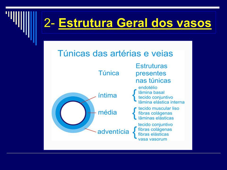 2- Estrutura Geral dos vasos