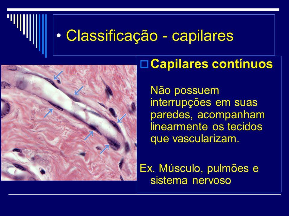 Classificação - capilares Capilares contínuos Não possuem interrupções em suas paredes, acompanham linearmente os tecidos que vascularizam. Ex. Múscul