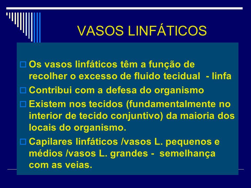 VASOS LINFÁTICOS Os vasos linfáticos têm a função de recolher o excesso de fluido tecidual - linfa Contribui com a defesa do organismo Existem nos tec
