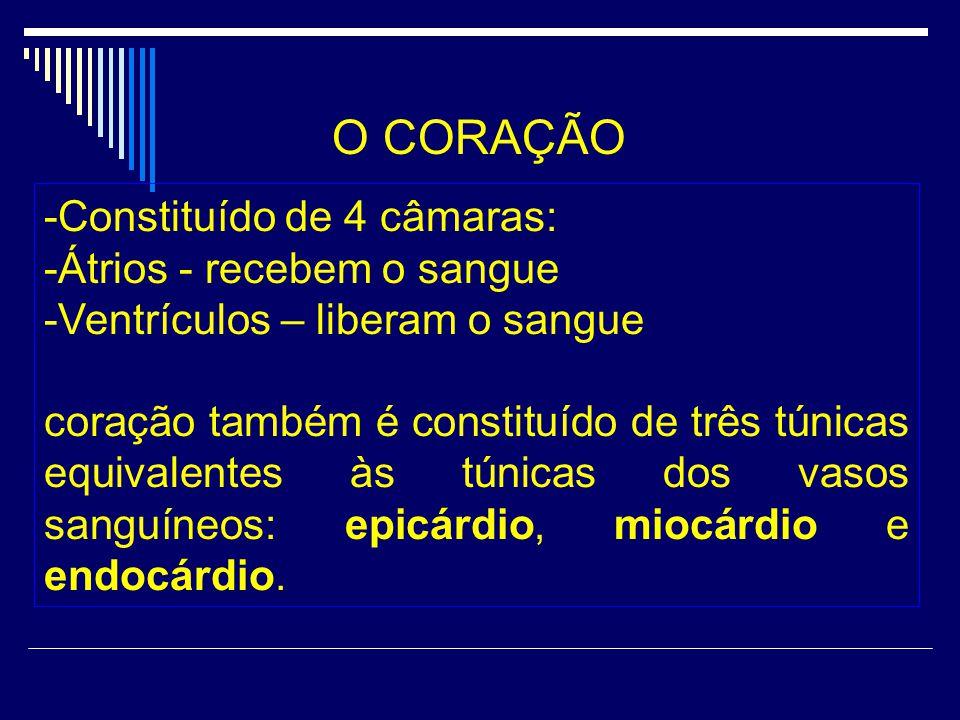 O CORAÇÃO -Constituído de 4 câmaras: -Átrios - recebem o sangue -Ventrículos – liberam o sangue coração também é constituído de três túnicas equivalen