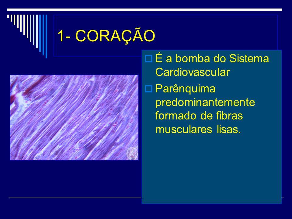 1- CORAÇÃO É a bomba do Sistema Cardiovascular Parênquima predominantemente formado de fibras musculares lisas.