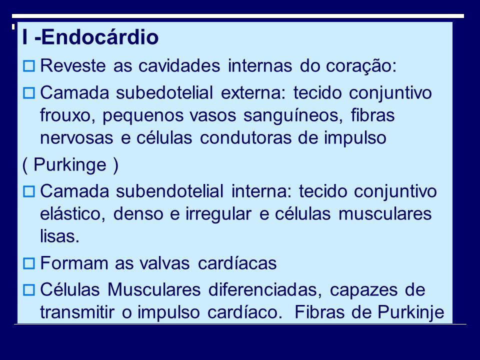 I -Endocárdio Reveste as cavidades internas do coração: Camada subedotelial externa: tecido conjuntivo frouxo, pequenos vasos sanguíneos, fibras nervo