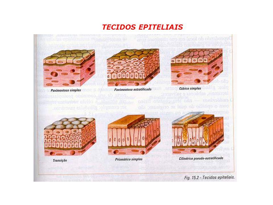 PLAQUETAS ou TROMBÓCITOS No sangue circulante existe uma proteína solúvel (fibrinogênio), que se converte em fibrina, após a saída de sangue em um vaso lesado.