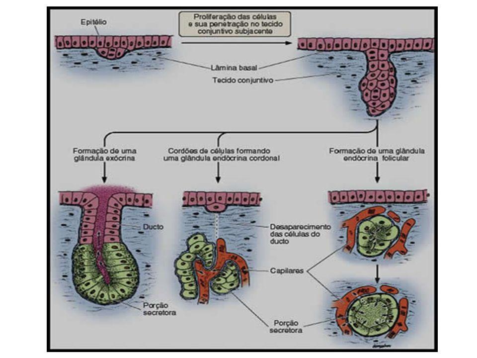 Tecido epitelial Tecido conjuntivo Tecido Muscular Tecido Nervoso Tecido Ósseo Tecido Conjuntivo Adiposo