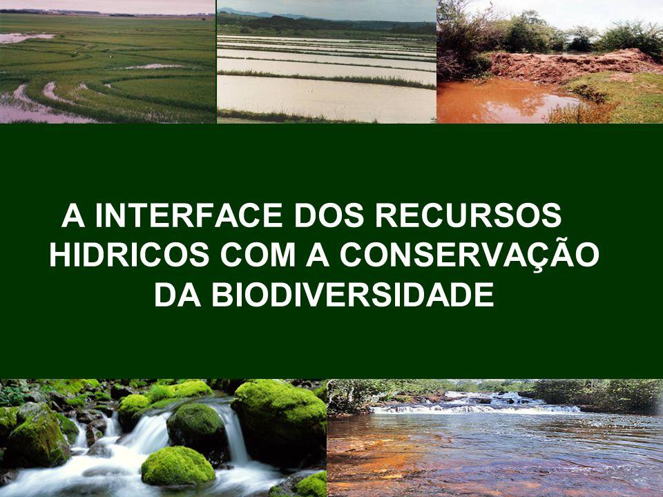 83 Considerando-se, segundo inúmeros autores, que o Brasil é detentor de mais de 20% das espécies do planeta, e também ressaltando o fato de ser dono da maior diversidade genética vegetal, com cerca de 55.000 espécies catalogadas de um total estimado entre 350.000 e 550.00 espécies, (...)