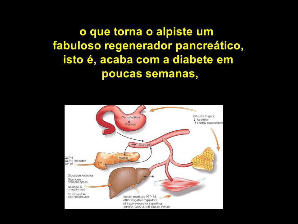 o que torna o alpiste um fabuloso regenerador pancreático, isto é, acaba com a diabete em poucas semanas,