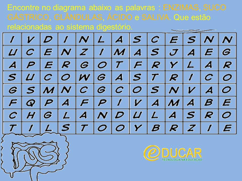 Encontre no diagrama abaixo as palavras : ENZIMAS, SUCO GÁSTRICO, GLÂNDULAS, ÁCIDO e SALIVA. Que estão relacionadas ao sistema digestório.