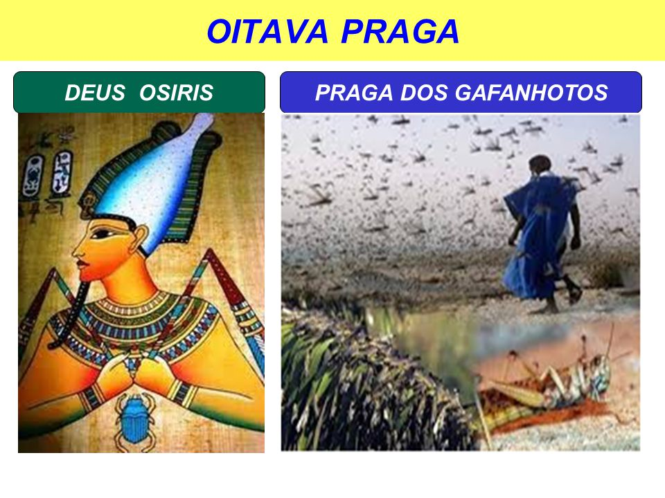 OITAVA PRAGA DEUS OSIRISPRAGA DOS GAFANHOTOS