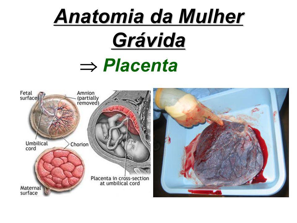 Anatomia da Mulher Grávida Placenta