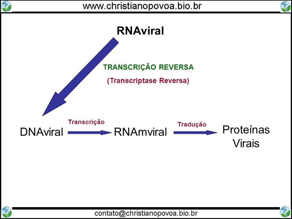 DNAviralRNAmviral Proteínas Virais Transcrição Tradução RNAviral TRANSCRIÇÃO REVERSA (Transcriptase Reversa)