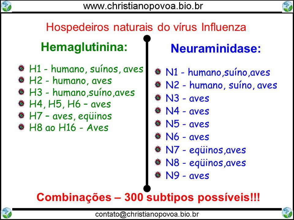 Hospedeiros naturais do vírus Influenza Hemaglutinina: H1 - humano, suínos, aves H2 - humano, aves H3 - humano,suíno,aves H4, H5, H6 – aves H7 – aves,