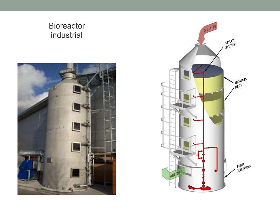 Bioreactor industrial