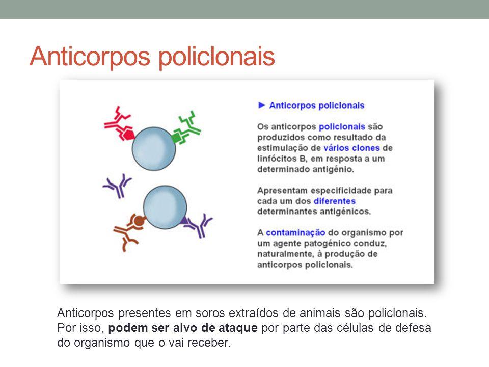 Anticorpos policlonais Anticorpos presentes em soros extraídos de animais são policlonais. Por isso, podem ser alvo de ataque por parte das células de