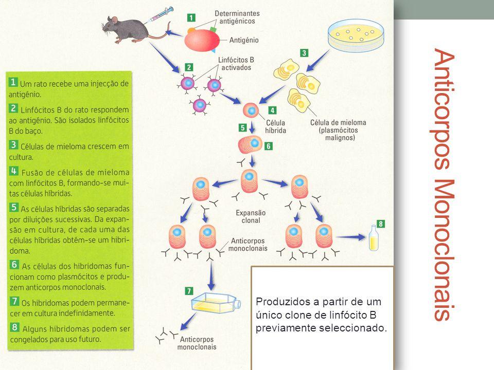 Anticorpos Monoclonais Produzidos a partir de um único clone de linfócito B previamente seleccionado.