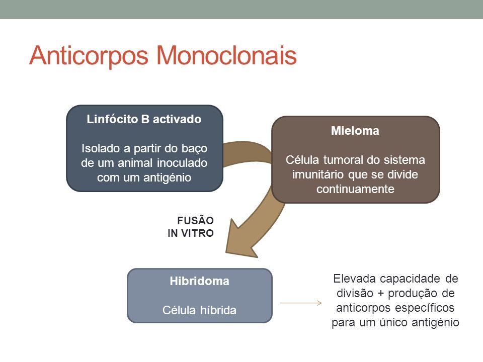 Anticorpos Monoclonais Linfócito B activado Isolado a partir do baço de um animal inoculado com um antigénio Mieloma Célula tumoral do sistema imunitá