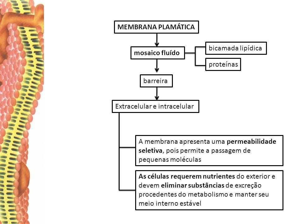MEMBRANA PLAMÁTICA mosaico fluído bicamada lipídica proteínas barreira Extracelular e intracelular As células requerem nutrientes do exterior e devem eliminar substâncias de excreção procedentes do metabolismo e manter seu meio interno estável A membrana apresenta uma permeabilidade seletiva, pois permite a passagem de pequenas moléculas