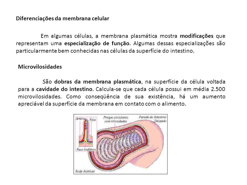 Diferenciações da membrana celular Em algumas células, a membrana plasmática mostra modificações que representam uma especialização de função. Algumas