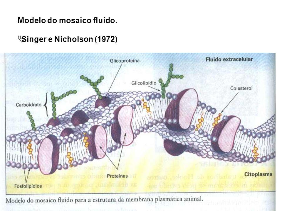 Modelo do mosaico fluído. Singer e Nicholson (1972)
