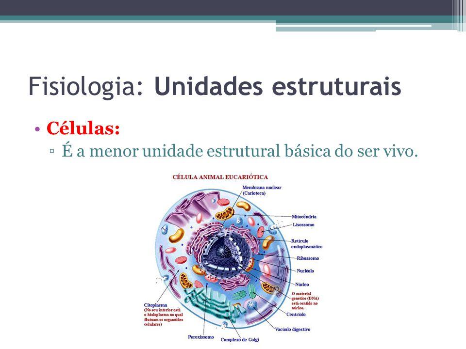 Fisiologia: Unidades estruturais Células: É a menor unidade estrutural básica do ser vivo.