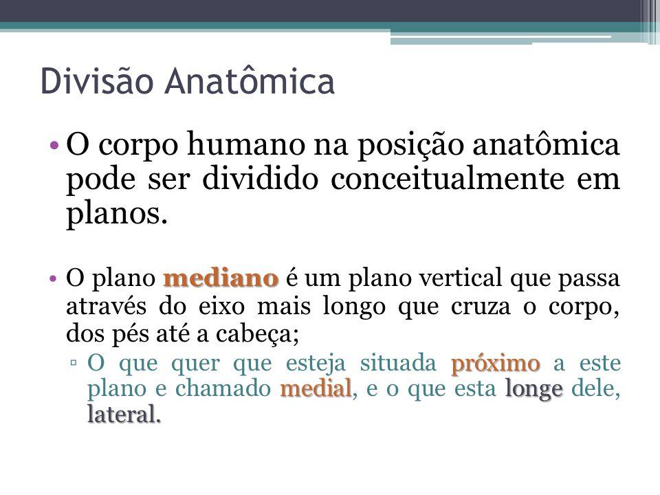 Divisão Anatômica O corpo humano na posição anatômica pode ser dividido conceitualmente em planos.