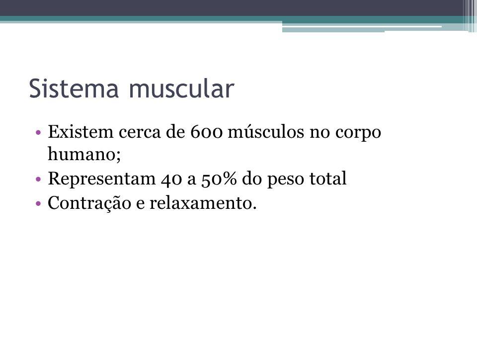 Sistema muscular Existem cerca de 600 músculos no corpo humano; Representam 40 a 50% do peso total Contração e relaxamento.