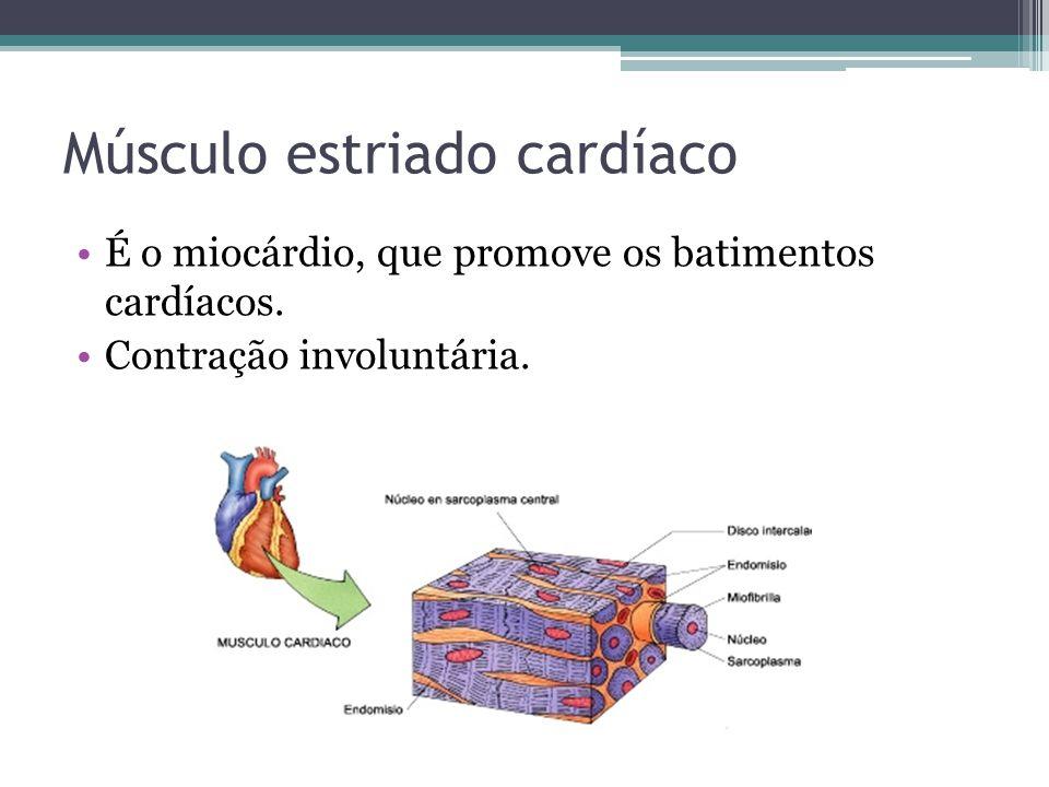 Músculo estriado cardíaco É o miocárdio, que promove os batimentos cardíacos.