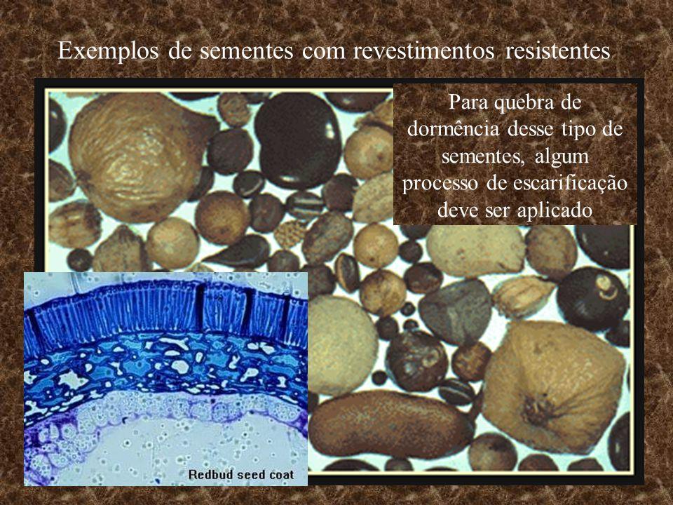 Exemplos de sementes com revestimentos resistentes Para quebra de dormência desse tipo de sementes, algum processo de escarificação deve ser aplicado