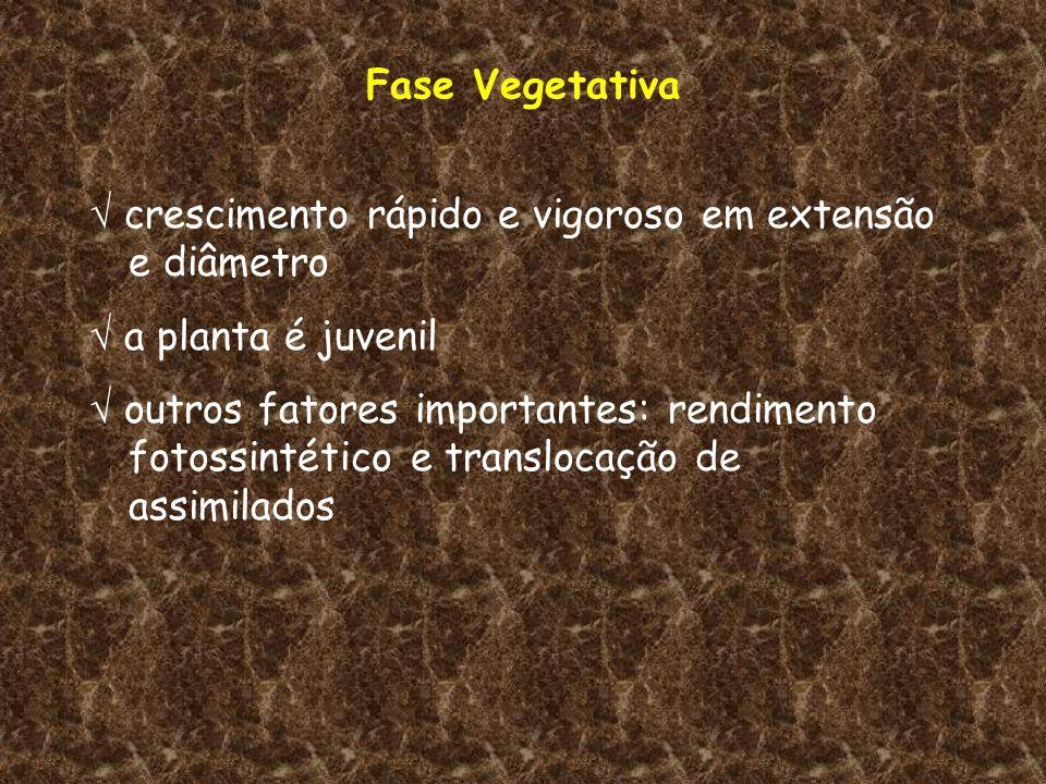 Fase Vegetativa crescimento rápido e vigoroso em extensão e diâmetro a planta é juvenil outros fatores importantes: rendimento fotossintético e transl