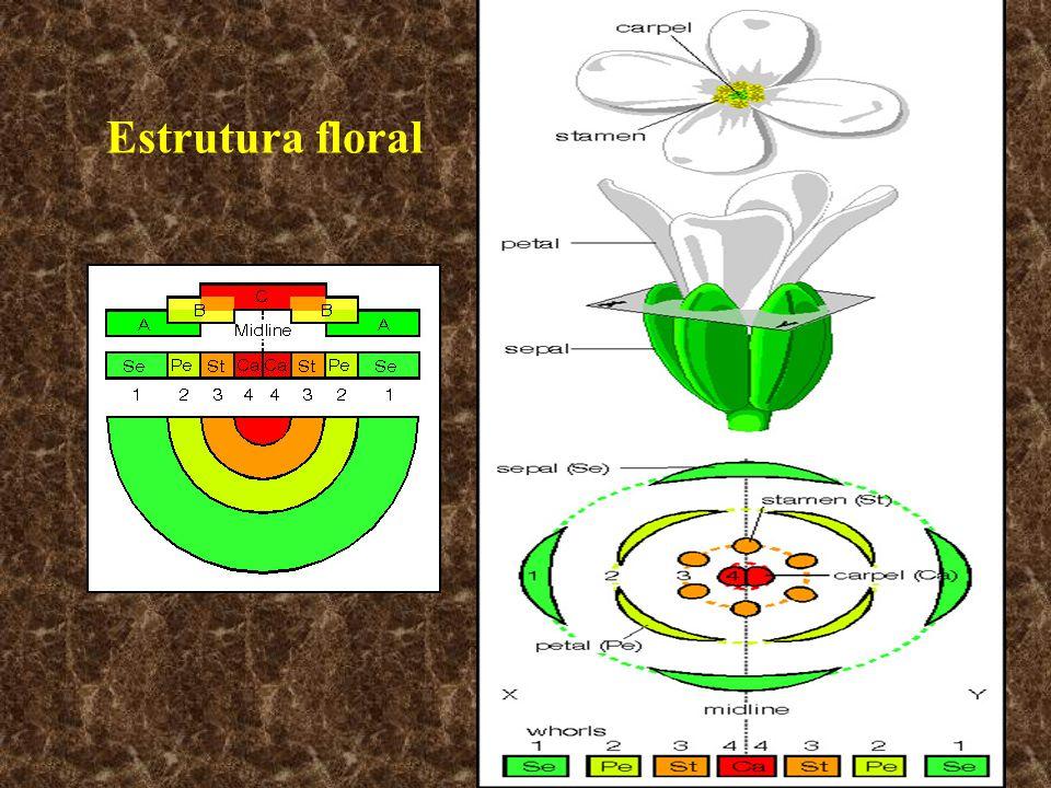 Estrutura floral