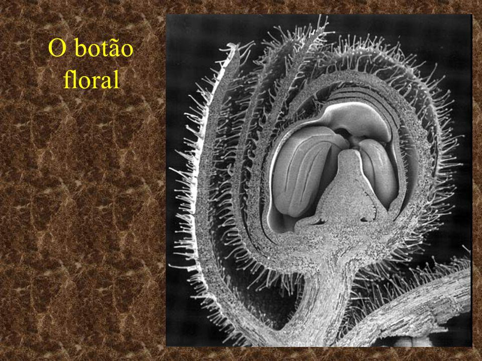 O botão floral