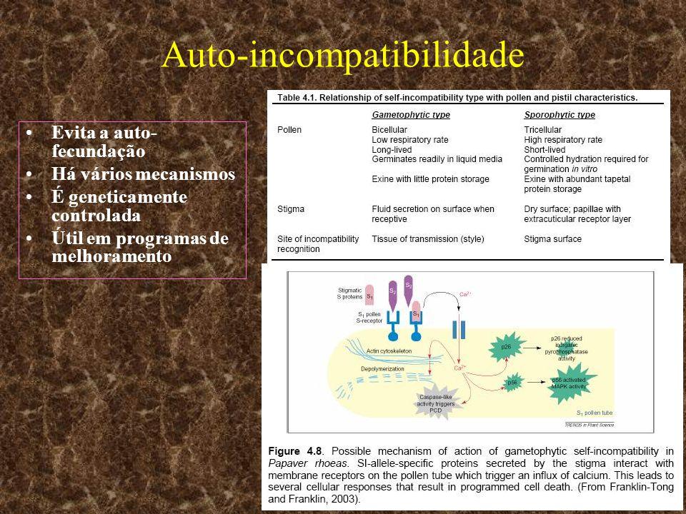 Auto-incompatibilidade Evita a auto- fecundação Há vários mecanismos É geneticamente controlada Útil em programas de melhoramento
