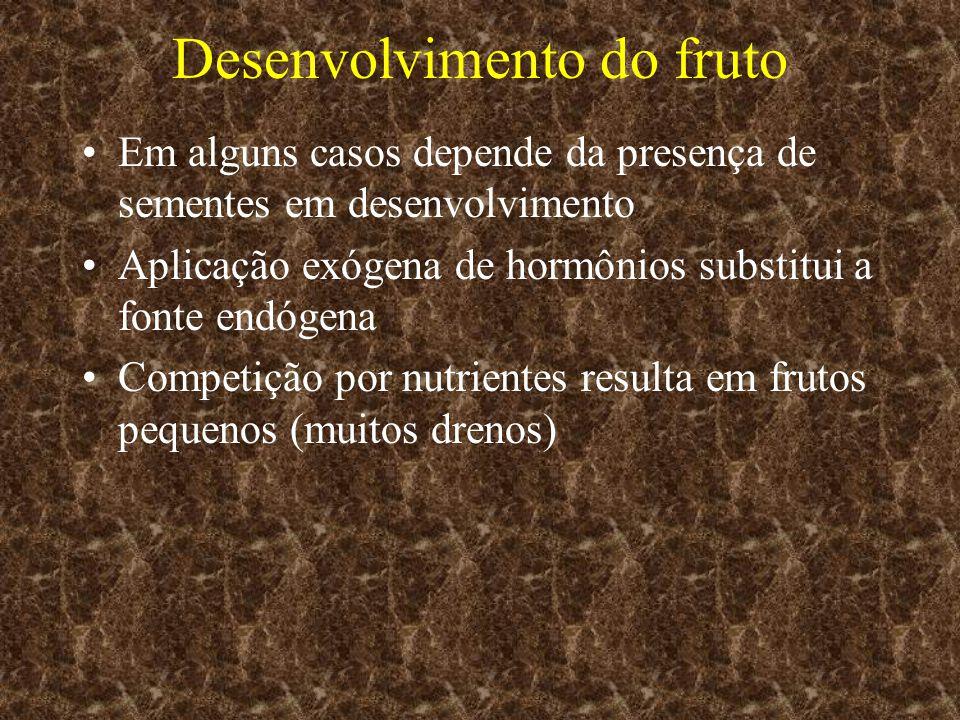 Desenvolvimento do fruto Em alguns casos depende da presença de sementes em desenvolvimento Aplicação exógena de hormônios substitui a fonte endógena