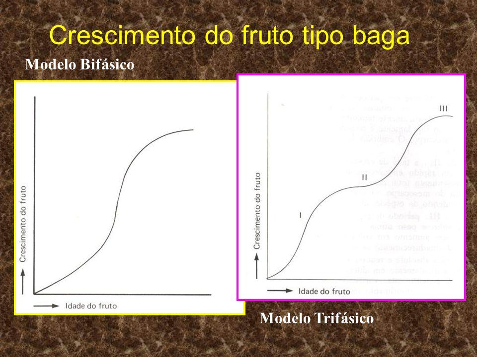 Crescimento do fruto tipo baga Modelo Bifásico Modelo Trifásico