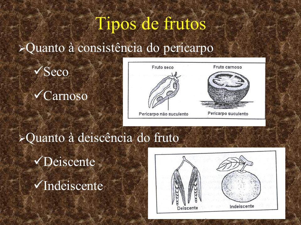 Quanto à consistência do pericarpo Seco Carnoso Quanto à deiscência do fruto Deiscente Indeiscente Tipos de frutos