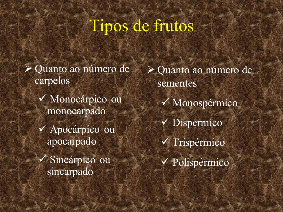 Quanto ao número de carpelos Monocárpico ou monocarpado Apocárpico ou apocarpado Sincárpico ou sincarpado Quanto ao número de sementes Monospérmico Di