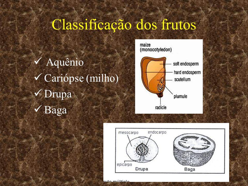 Classificação dos frutos Aquênio Cariópse (milho) Drupa Baga
