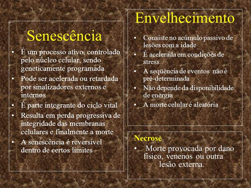 Senescência É um processo ativo, controlado pelo núcleo celular, sendo geneticamente programada Pode ser acelerada ou retardada por sinalizadores exte