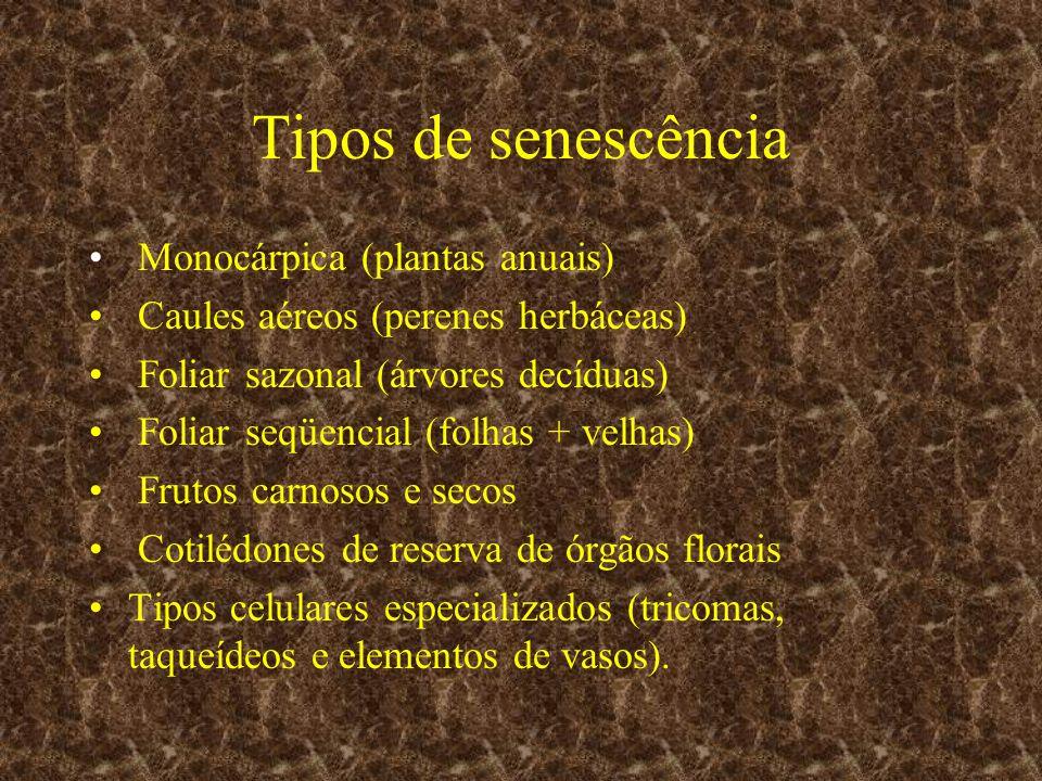 Tipos de senescência Monocárpica (plantas anuais) Caules aéreos (perenes herbáceas) Foliar sazonal (árvores decíduas) Foliar seqüencial (folhas + velh