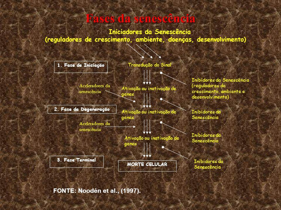 Iniciadores da Senescência (reguladores de crescimento, ambiente, doenças, desenvolvimento) Transdução do Sinal Ativação ou inativação de genes 1. Fas