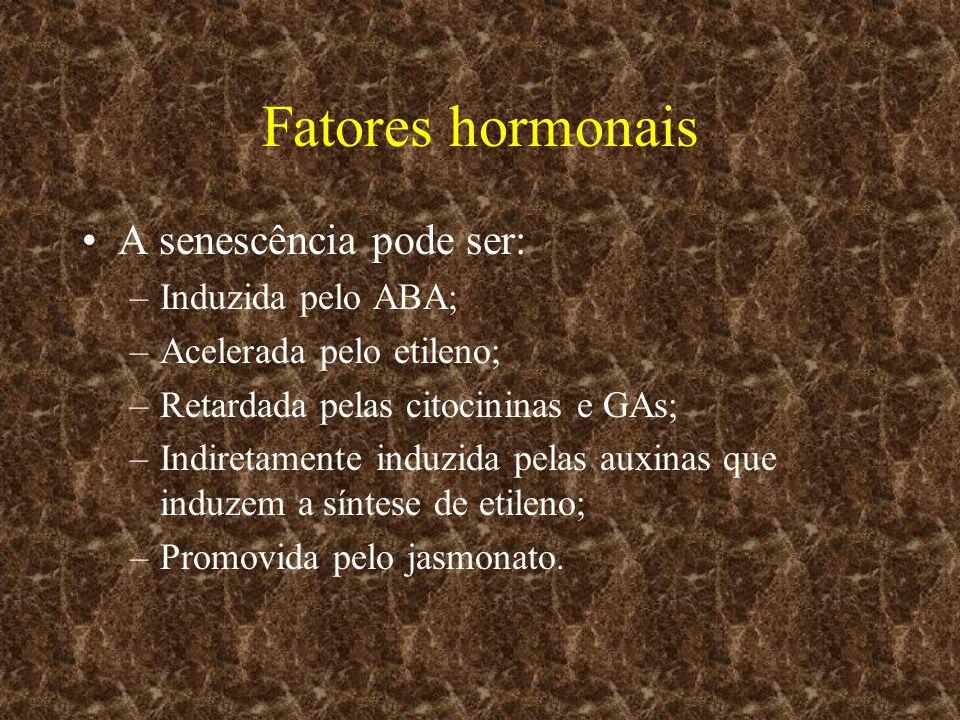 Fatores hormonais A senescência pode ser: –Induzida pelo ABA; –Acelerada pelo etileno; –Retardada pelas citocininas e GAs; –Indiretamente induzida pel