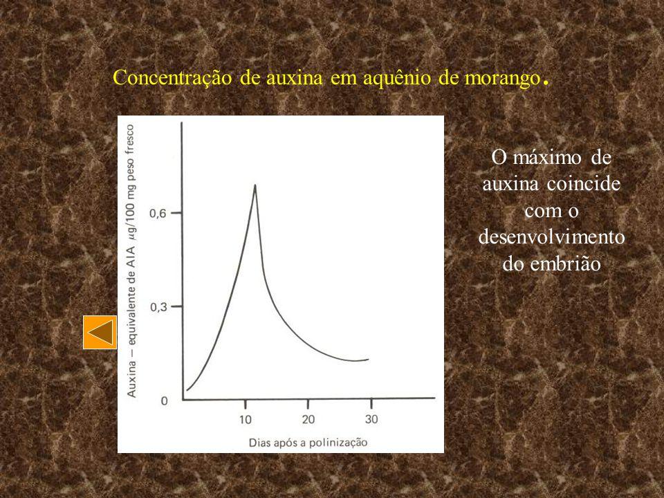 Concentração de auxina em aquênio de morango. O máximo de auxina coincide com o desenvolvimento do embrião