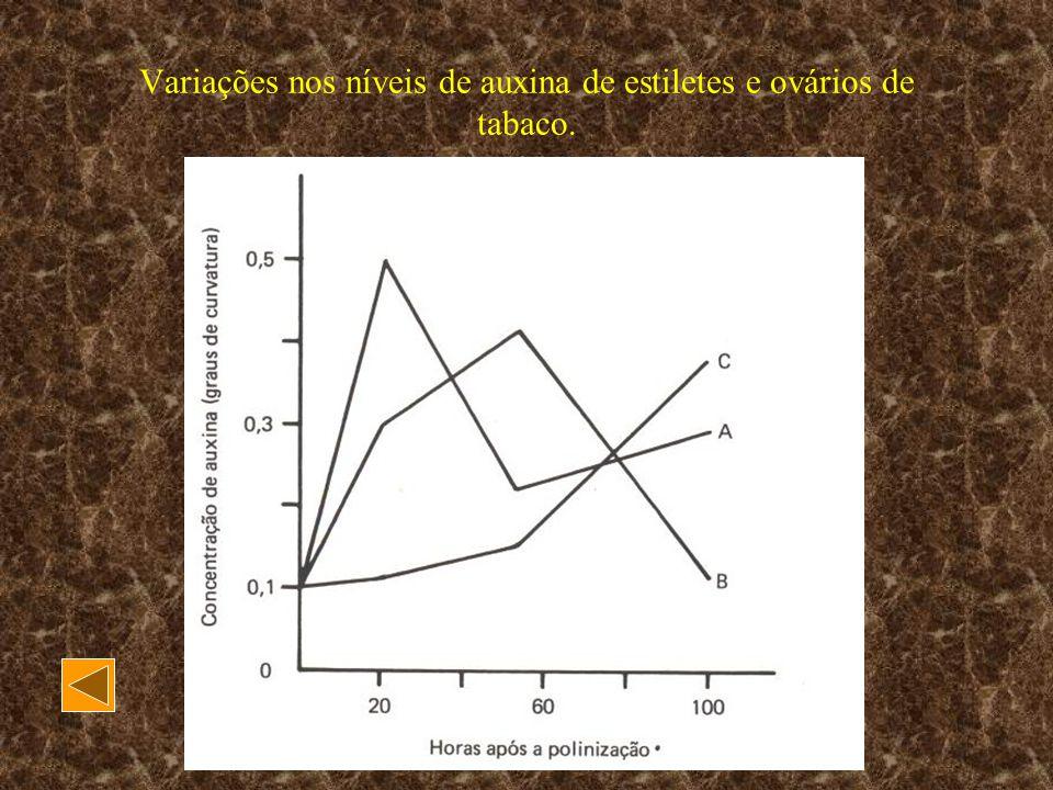 Variações nos níveis de auxina de estiletes e ovários de tabaco.