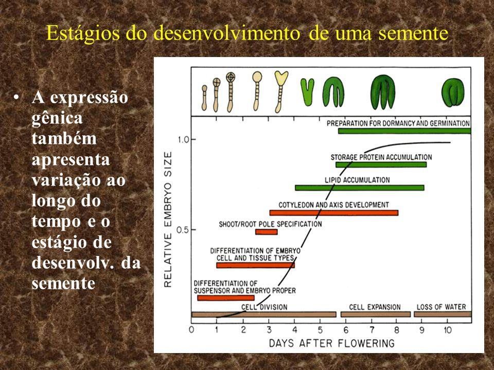 Estágios do desenvolvimento de uma semente A expressão gênica também apresenta variação ao longo do tempo e o estágio de desenvolv. da semente
